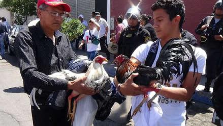 Criadores piden que no se prohíba pelea de gallos y peleas de toros en Arequipa