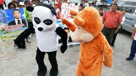 Trabajadores de Tumán se visten de osos para protestar contra Edwin Oviedo