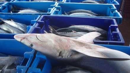 Tres cosas que debes saber sobre el consumo de tiburón en Perú