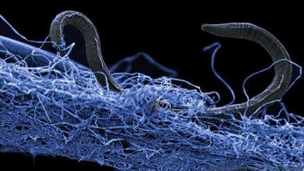 """""""Vida intraterrestre"""": Científicos descifran cómo viven los misteriosos organismos bajo la superficie de la Tierra"""