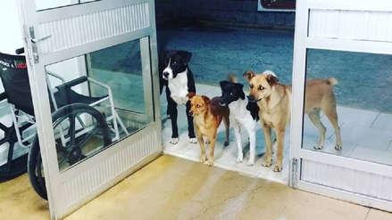 Brasil:  Cuatro perros esperaron en la puerta de un hospital a su dueño hasta que fuera atendido
