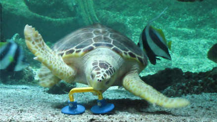 Científicos hallan residuos plásticos en estómagos de tortugas marinas de tres océanos