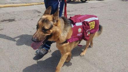 Rocky, el primer teniente canino que lucha contra los pirotécnicos