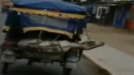 Tumbes: Un burro fue atado en la parte trasera de una mototaxi