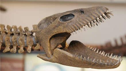 Así era el gigantesco reptil marino que vivió en Sudamérica hace 65 millones de años [FOTOS]