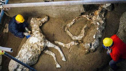Arqueólogos hallaron en Pompeya a un caballo petrificado ensillado y listo para montar
