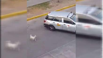 Facebook | Captan momento en que familia dejó a un perrito y se dan a la fuga