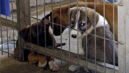 Reino Unido prohibirá la venta de perros y gatos menores de seis meses