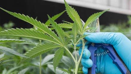 Tailandia legalizó la marihuana con fines medicinales y de investigación