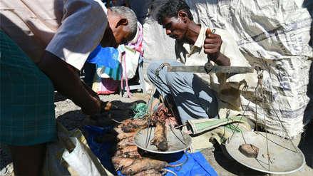 La rata, un manjar en India que se come tanto como el pollo o el cerdo