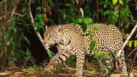 El año ambiental del Perú a través de 10 reportajes de Mongabay Latam