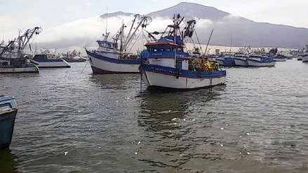 Primera temporada de pesca de anchoveta en zona sur iniciará el 8 de enero
