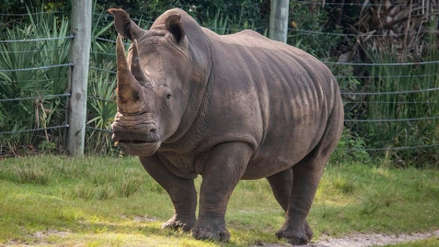 Una niña resultó herida al caer a la fosa de los rinocerontes del zoológico de Florida