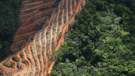 ¿Qué está provocando la deforestación? Un nuevo estudio revela factores mundiales