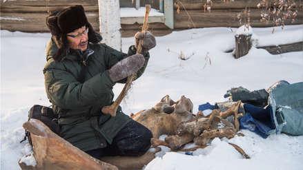 """La demanda china provoca una """"fiebre del mamut"""" en Siberia [FOTOS]"""