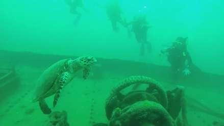 El buceo en barcos hundidos: La nueva tendencia turística en México [FOTOS Y VIDEO]