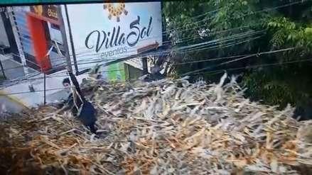 Video   Hombre arriesga su vida al manipular cables de alta tensión sobre un camión