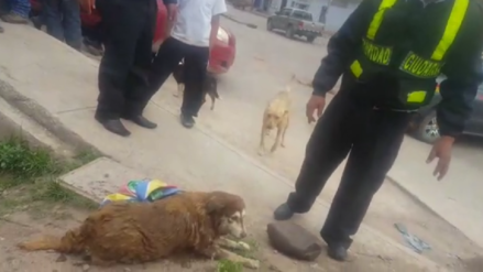 "Murió ""Sumac Tika"" perrita que fue rescatada del río Huatanay en Cusco"