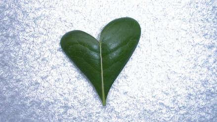 Amor - ecología - democracia