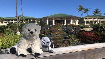 Niño olvidó sus peluches favoritos en un hotel y recibió fotos de sus 'vacaciones de ensueño'