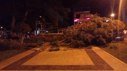 Áncash | Nueve niños heridos dejó la caída de la rama de un árbol en Casma