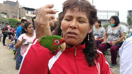 'Paulie, el náufrago': La historia del loro que fue rescatado del aniego en San Juan de Lurigancho