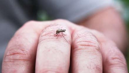 Dengue autóctono brota en Paiján y afecta a dos personas [VIDEO]