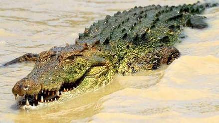 Una científica fue devorada por un cocodrilo en Indonesia