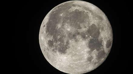 China consiguió que una semilla de algodón brote por primera vez en la Luna