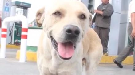 México | Un perro callejero evitó asalto en gasolinera y ciudadanos lo premian con una casa de madera y un baño especial