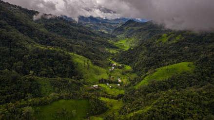 Cajamarca: Los últimos bosques de romerillo resisten en el norte del Perú