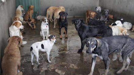 San Miguel: Municipalidad niega supuesto sacrificio de 236 perros que fue anunciado en redes sociales
