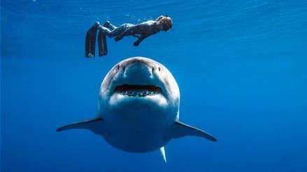 Buzos se toparon con un gigantesco tiburón blanco en el mar de Hawái