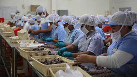Exportaciones pesqueras del Perú marcan un mayor valor para las especies marinas