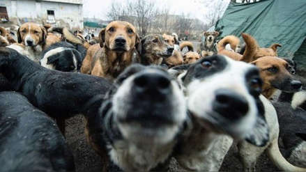 """Organización animalista confiesa que sacrificó a cientos de perros por """"piedad"""" y """"razones humanitarias"""""""