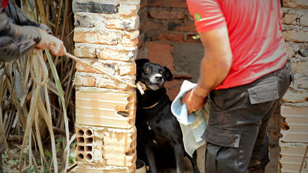 FOTOS | El arduo trabajo para rescatar a un perro abandonado en la zona del desastre minero en Brasil