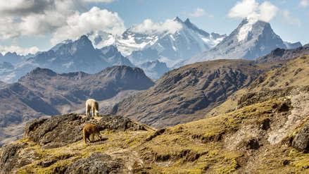 Estudio sugiere que la Cordillera de los Andes se empezó a formar hace 80 millones de años
