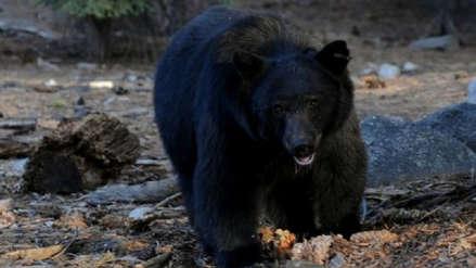 Un niño perdido durante dos días en el bosque dice que pasó todo el tiempo con un oso