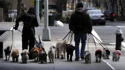 Prohíben el paseo de perros en lugares públicos en la capital de Irán