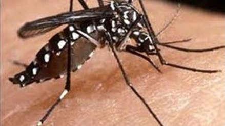 Dengue cobra su primera víctima mortal del año en La Libertad