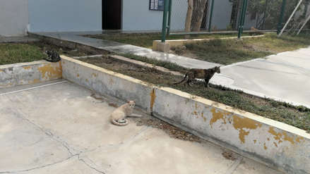 Fiscalía insta al Gobierno Regional a presidir el Comité de Protección Animal