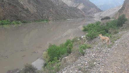 Mil familias y cultivos en riesgo por inminente desborde de río en Pataz