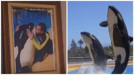 Una orca mató a su hijo pero ella no quiere venganza: las quiere ver en libertad