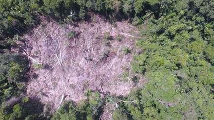 Deforestación y violencia se instalan en el centro de investigación Bosque Macuya en Ucayali