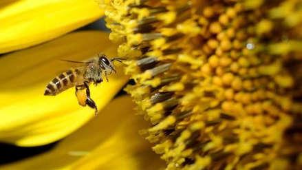 Las abejas son capaces de hacer sumas y restas
