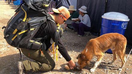 Animales afectados tras huaico en Mirave fueron atendidos por médico veterinario voluntario