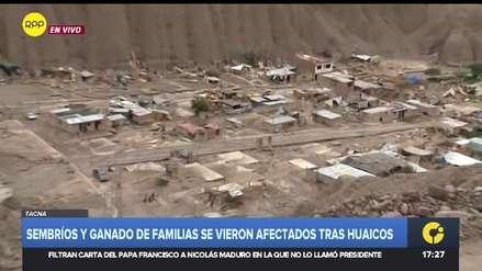 Tacna | Sembríos y ganado de familias en Mirave también fueron afectados por huaico