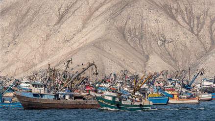 El desvío ilegal de anchoveta en el Perú