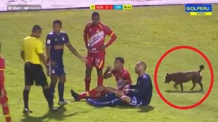Sporting Cristal: perro entró a la cancha en pleno partido ante Sport Huancayo