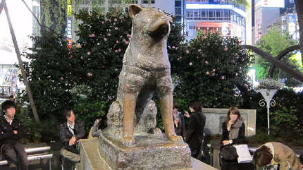 Fiel hasta la muerte: La conmovedora historia del perrito Hachiko | Japón Cool